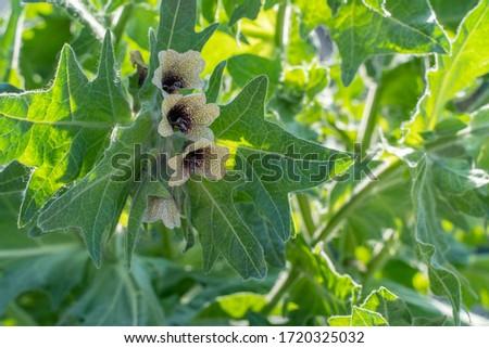 ramo · frutas · perene · planta · família · transparente - foto stock © Lady-Luck
