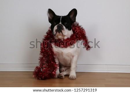 francia · bulldog · visel · fekete · kalap · kacsintás - stock fotó © feedough