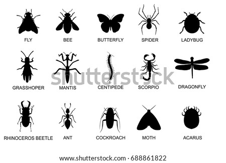 Set of colour moth and silhouette Stock photo © bluering