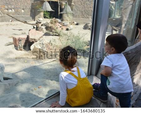 Küçük erkek sevimli çocuk izlerken Stok fotoğraf © galitskaya