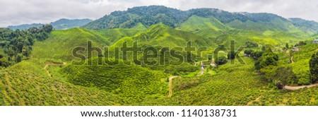 Banner erstaunlich Landschaft Ansicht Tee Plantage Stock foto © galitskaya
