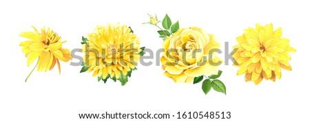закрывается бутон желтый лимона цвета изолированный Сток-фото © Lady-Luck
