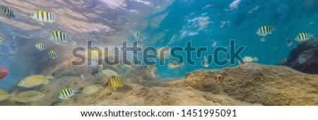 çok balık deniz yaratıklar bitkiler su Stok fotoğraf © galitskaya