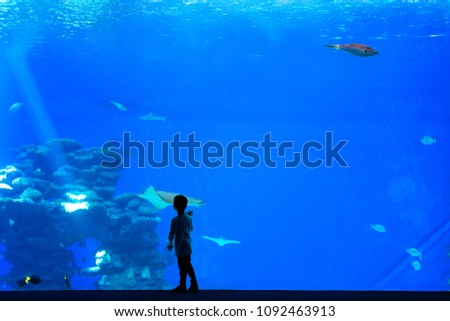 Little boy, kid watching the shoal of fish swimming in oceanarium, children enjoying underwater life Stock photo © galitskaya