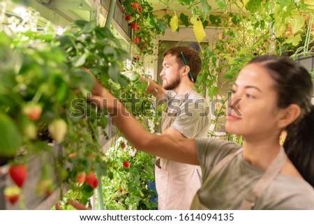 Genç erkek bahçıvan önlük bakım Stok fotoğraf © pressmaster