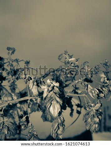 After the eruption of the volcano. Plants covered with ash from a volcano Stock photo © galitskaya