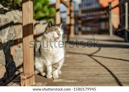 Sun Stock photo © zzve