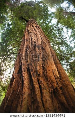 лесу · мало · ручей · Сан-Франциско · Калифорния · США - Сток-фото © billperry