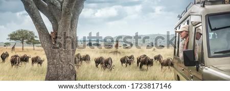 ストックフォト: キリン · アフリカ · 見える · 男 · 月