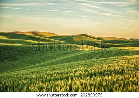 Yellow Green Wheat Fields and Farms from Steptoe Butte Palouse W Stock photo © billperry
