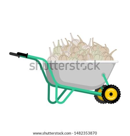 Talicska fokhagyma zöldségek kert nagy aratás Stock fotó © popaukropa