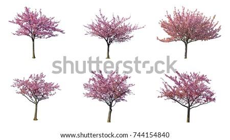 листьев · дерево · изолированный · белый · вектора - Сток-фото © Lady-Luck