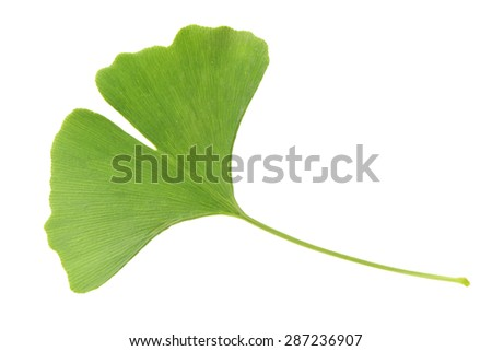 bladeren · Geel · blad · najaar · spa · plant - stockfoto © odina222