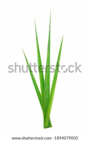 lemongrass tied with rope Stock photo © szefei