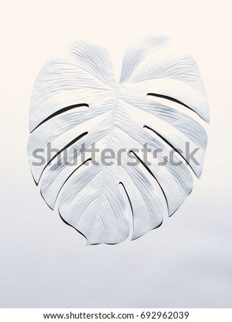 Top view Monstera plant Philodendron with shadows from the leaves on a a color Living Coral backgrou Stock photo © artjazz