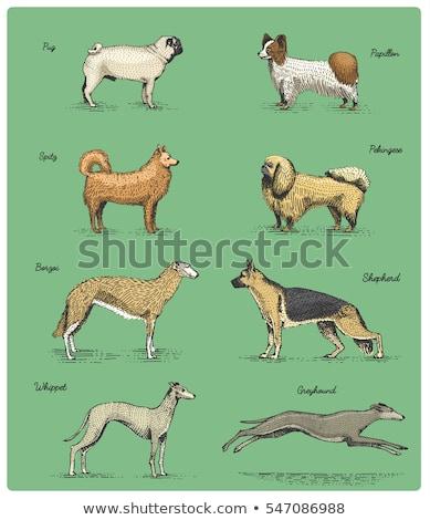 Greyhound Dog Breed Cartoon Retro Drawing Stock photo © patrimonio