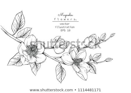 Patrón dibujado a mano colección magnolia flores hojas Foto stock © Margolana