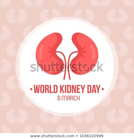 World kidney day. Vector illustration Stock photo © Imaagio