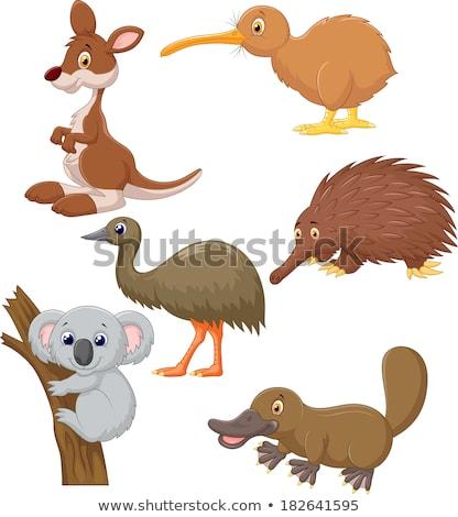 Ingesteld australisch dieren vogels silhouetten natuur Stockfoto © ColorHaze