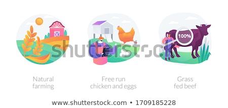 Livre correr frango ovos abstrato gaiola Foto stock © RAStudio