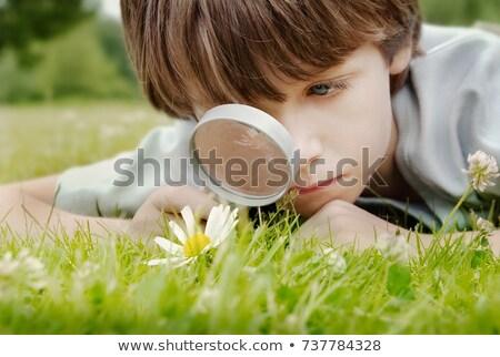 flower through magnifier stock photo © paha_l
