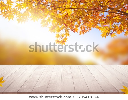 Bokeh autumn nature background Stock photo © mythja