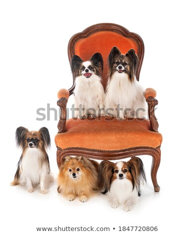 Stock photo: group of five papillon dogs