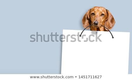 gönderemezsiniz · 3d · render · yaz · imzalamak · yardım - stok fotoğraf © latent