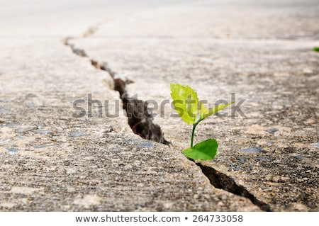green plant growing from cracked earth new life stock photo © redpixel