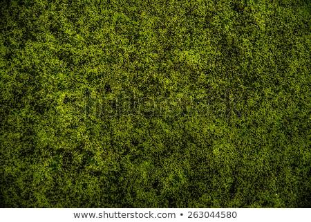 świeże mech zielone charakter ogród trawy Zdjęcia stock © sweetcrisis