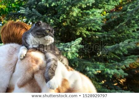 beauty woman wearing fur stock photo © konradbak