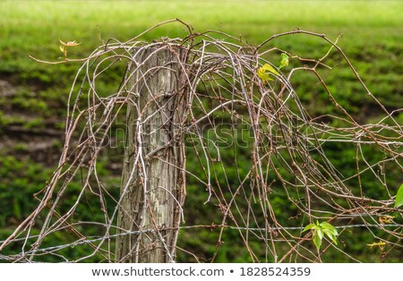 wooden entanglement Stock photo © prill