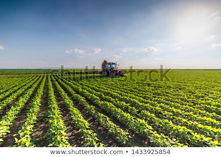 бобов плантация экологический фермы небе трава Сток-фото © photosil