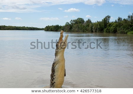 Saltando crocodilo Austrália tropical topo Foto stock © roboriginal