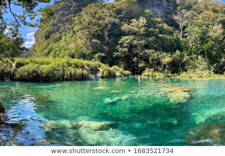 Jungle lagoon Stock photo © curaphotography