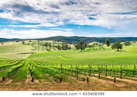 Sul da austrália imagem belo sul australiano cenário Foto stock © magann