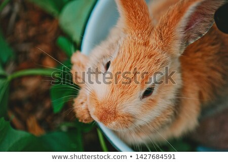 Cross-Eyed Bunny Face Stock photo © eldadcarin
