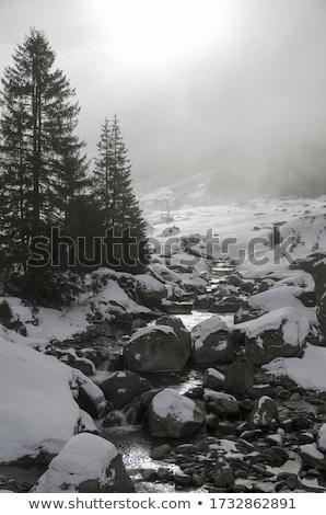 nieve · cubierto · pino · árboles · lado · río - foto stock © donland