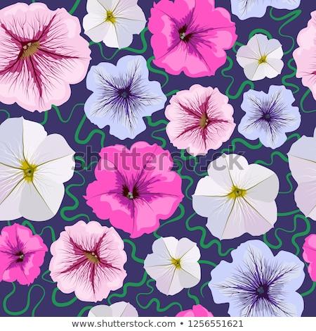 Pink Petunia Flower stock photo © tainasohlman
