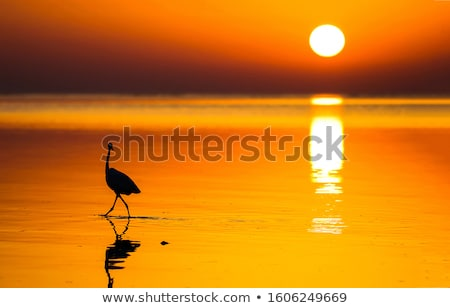 sunset and silhouette bird  stock photo © tungphoto