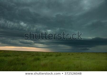 sötét · este · égbolt · zöld · mező · viharos - stock fotó © digoarpi