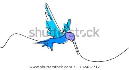 手描き ハチドリ 美しい 孤立した 白 黒 ストックフォト © HypnoCreative
