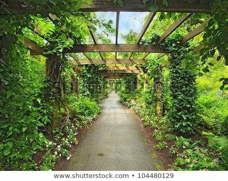 Pasaje jardín árboles plantas verano Foto stock © smuki
