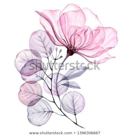 Paars witte roze bloem geïsoleerd bloeien bloemen Stockfoto © stocker