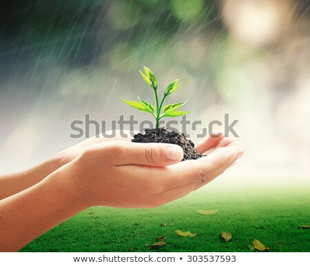 Hands holding a small tree Stock photo © almir1968