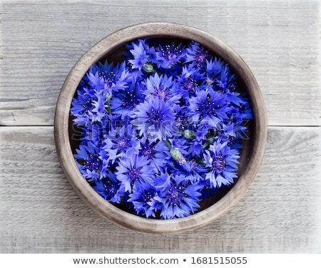 василек мак цветы цветок природы Сток-фото © eleaner