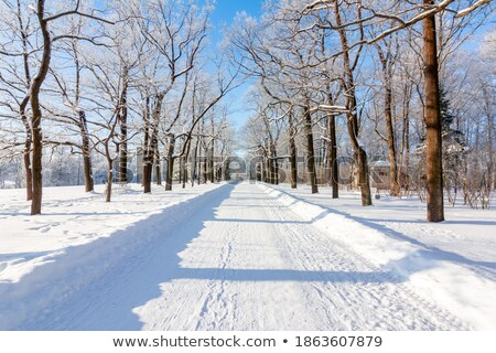 winter alley and catherine palace in the pushkin stock photo © pilgrimego