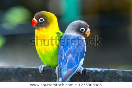 Feeding Colorful parrots Stock photo © Witthaya