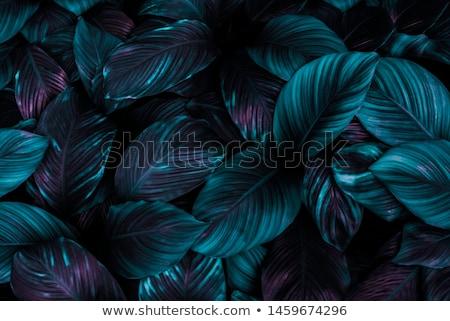 Primer plano agua vegetación hermosa azul verde Foto stock © igabriela