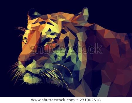 Faible design tigre illustration eps10 format Photo stock © krash20